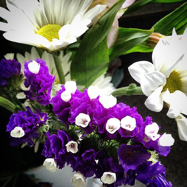As We Bloom, Blooms Bloom.