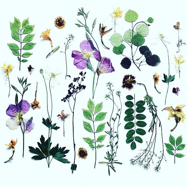 Plantspiration ☺️ from @omjsk INSTAGRAM